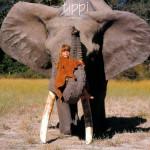 森林女孩Tippi与她的野生动物朋友