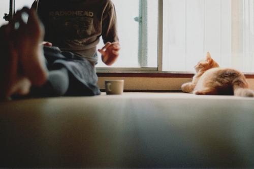 boy-cat